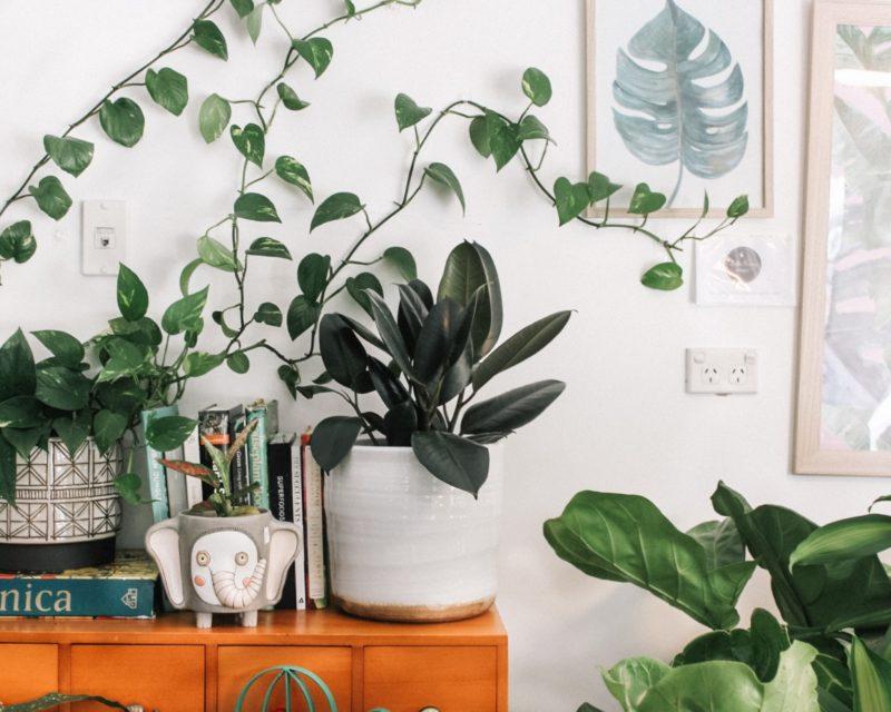 植物を元気に育てながらおしゃれに飾れる部屋にするためには?